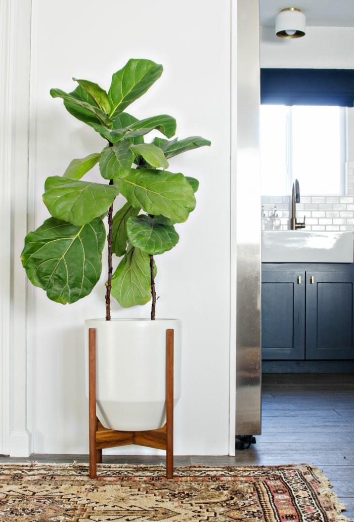 pflanze mit großen blättern moderne deko flur dekorieren