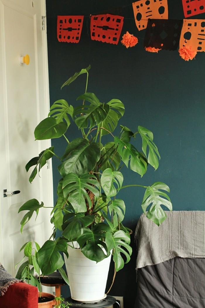 pflanze mit großen blättern monstera pflanze wohnzimmer dekorieren