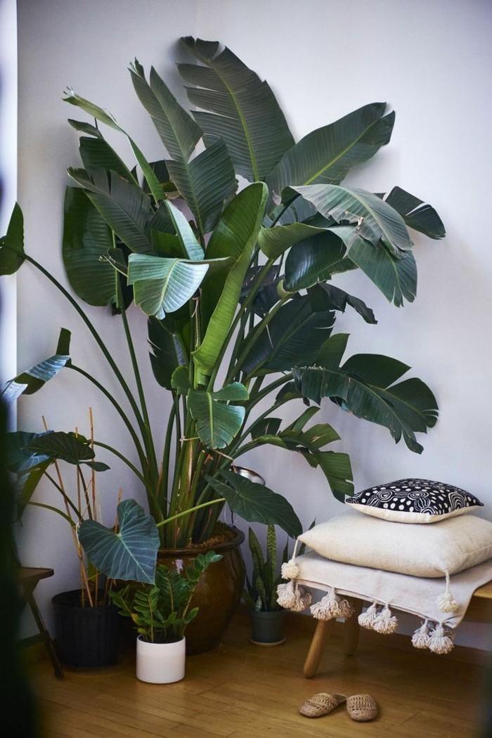 pflanze mit großen blättern palmen zimmerpflanzen