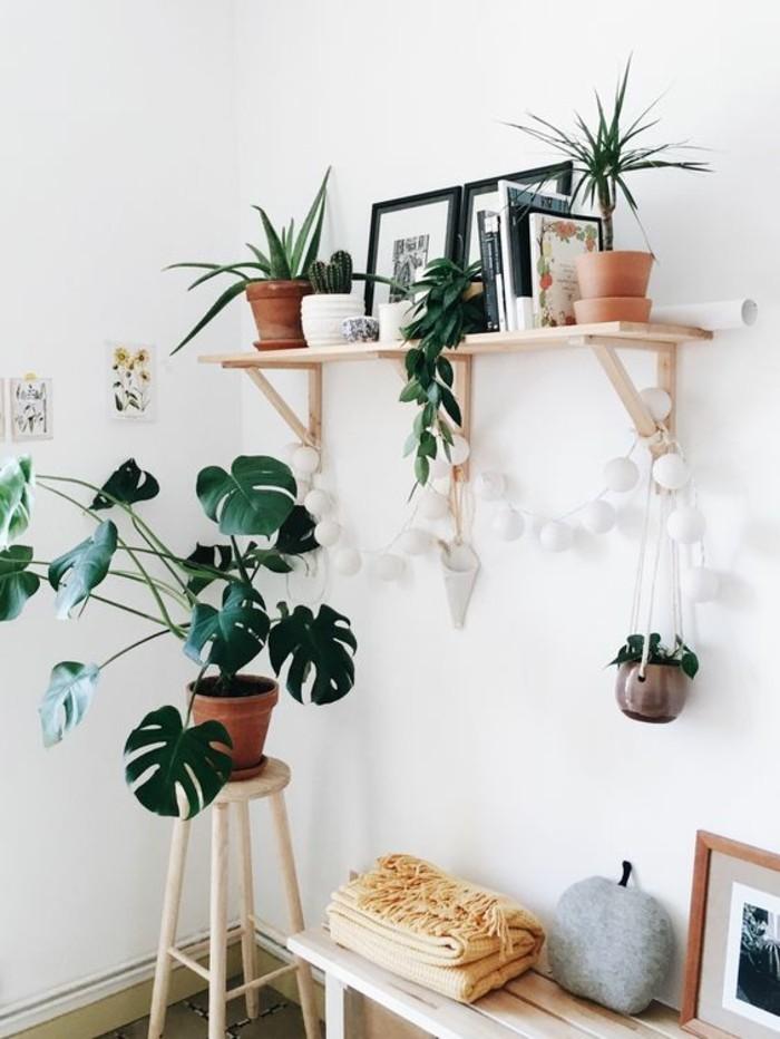 pflanze mit großen blättern passende zimmerpflanzen aussuchen