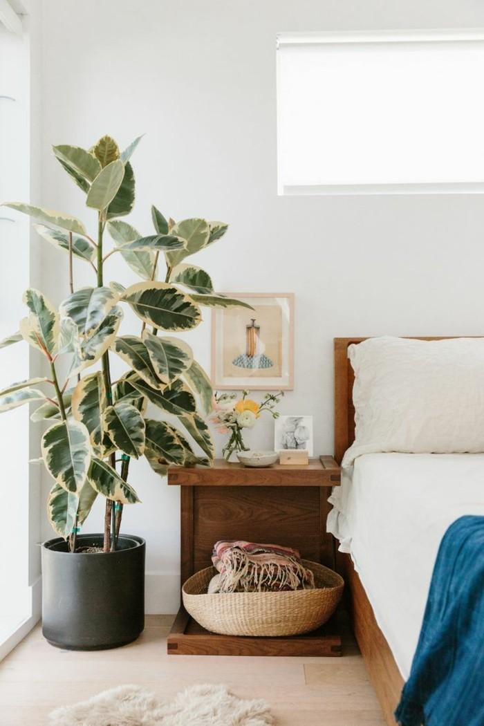 pflanze mit großen blättern schöne färbung schlafzimmer dekorieren