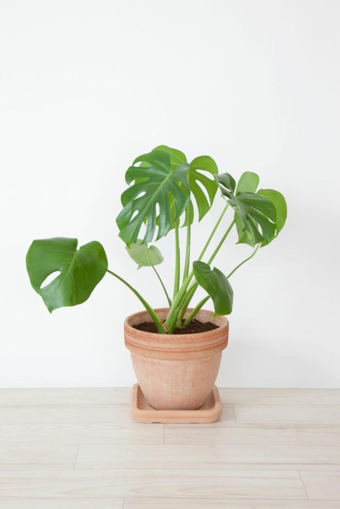 pflanze mit großen blättern wohnung dekorieren ideen