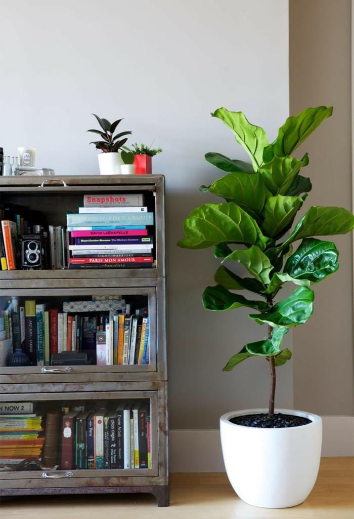 pflanze mit großen blättern zimmerpflanze kleine bibliothek
