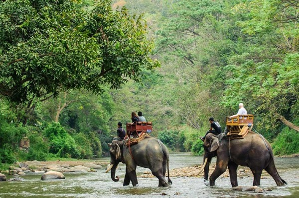 Abenteuerreisen Elefantenfahrt die Welt erkundigen Safari Tour