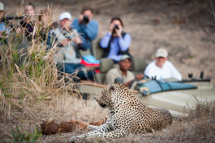 Abenteuerreisen Südafrika Krüger Nationalpark Tiere fotografieren