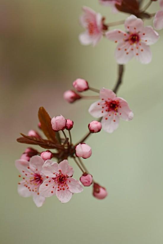 Blumen Bedeutung Feng Shui