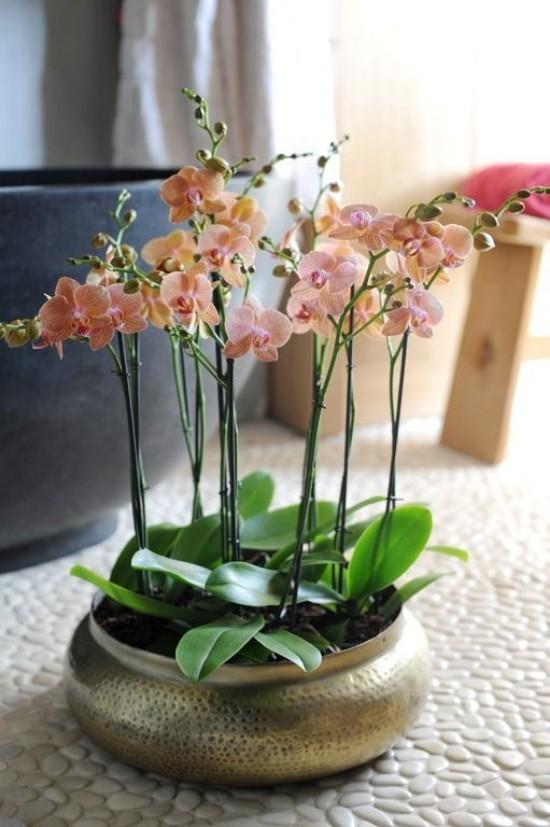 Feng Shui Blumen Bedeutung Einklang mit sich und der Natur Orchidee im Bad