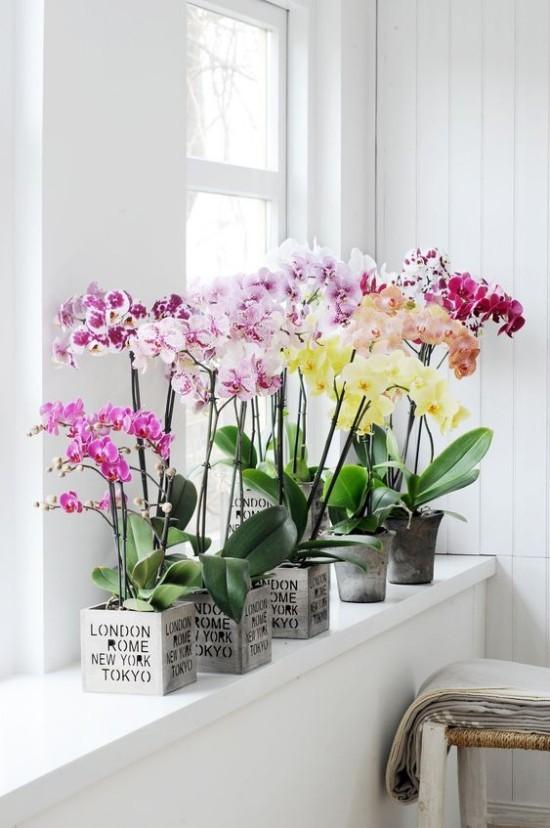 Feng Shui Blumen Bedeutung Orchideen in Töpfen