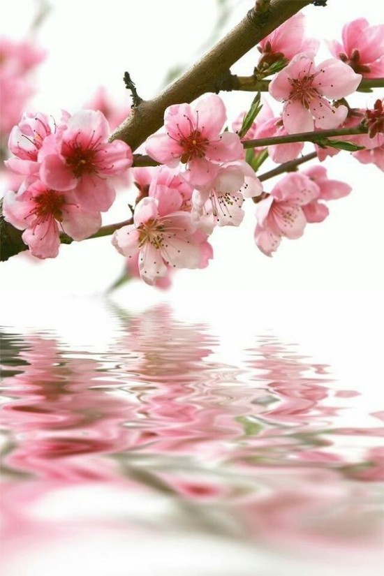 Feng Shui Blumen