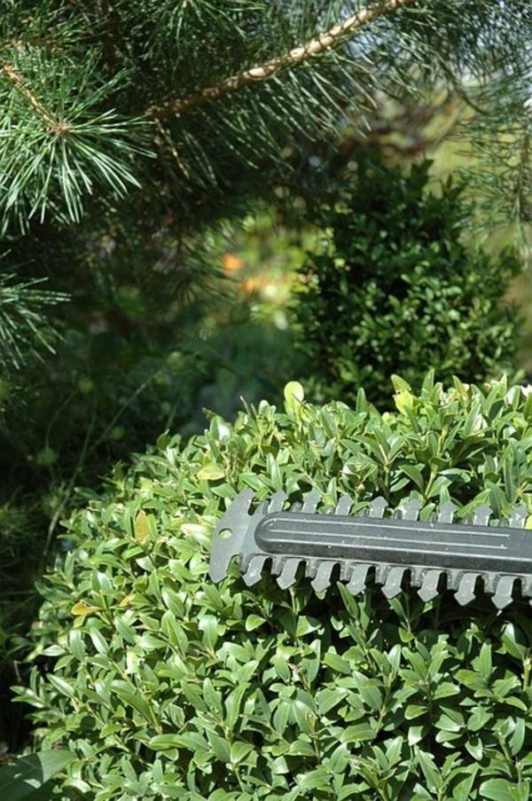 Gartenarbeit Hecke schneiden