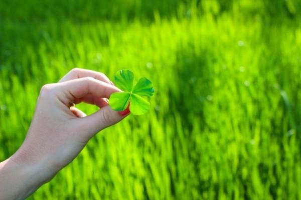 Glücksbringer Glück Wohlstand