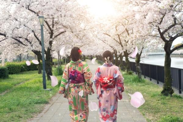 Japan Osaka Frühling Kirschbäume blühen Spaziergang im Park