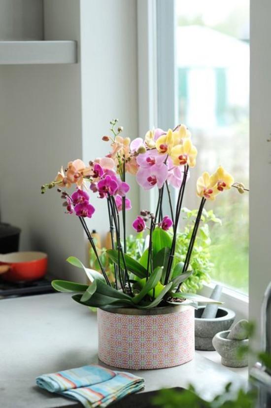 Orchideen natürliche Schönheit ins Haus bringen Feng Shui Blumen Bedeutung