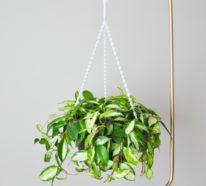 Die Vielfalt der Pflanzenständer – aus unserer Upcycling Ideenreihe
