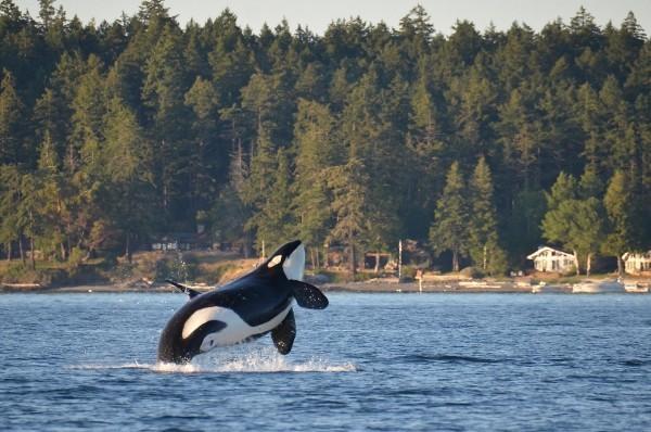 Romantischer Urlaubsort nicht weit von Henry Insel Washington State