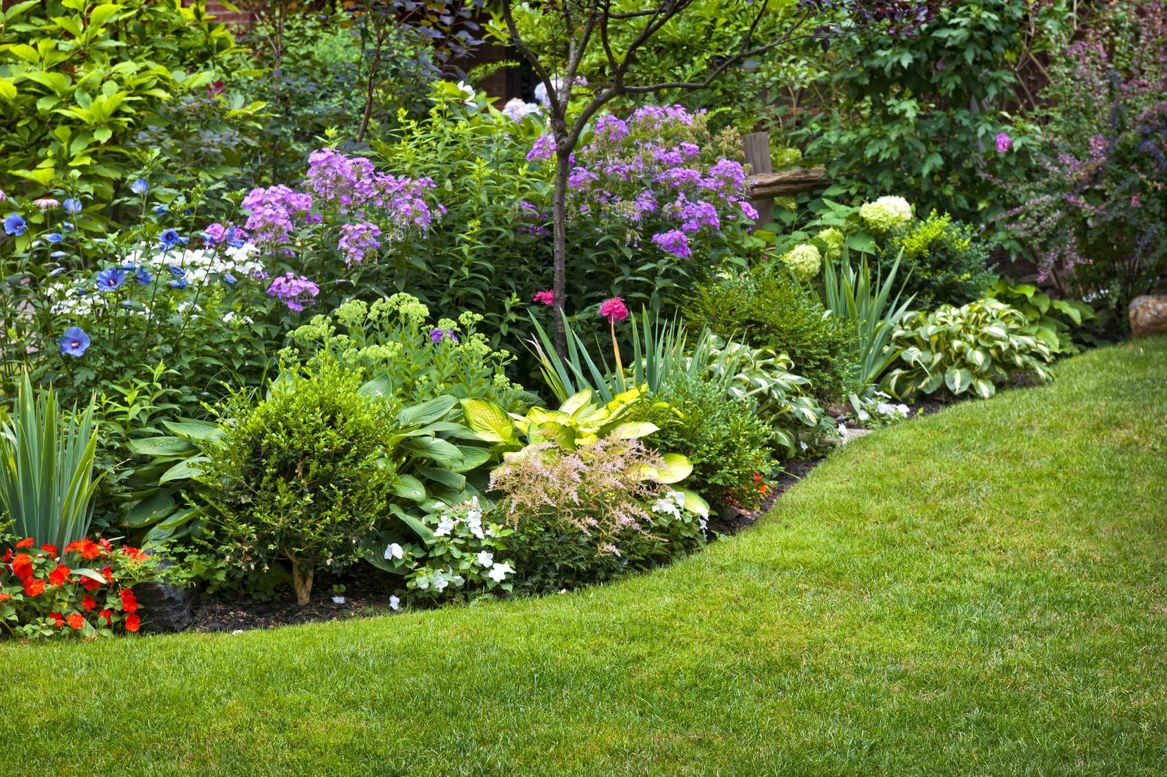 beeteinfassung mit pflanzen: welche kräuter, sträucher und blumen