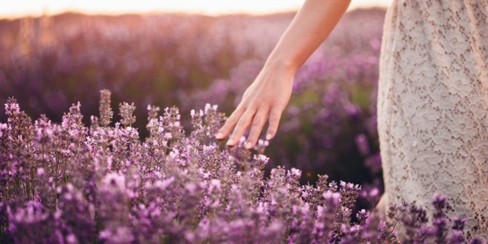 beeteinfassung mit lavendel selber machen