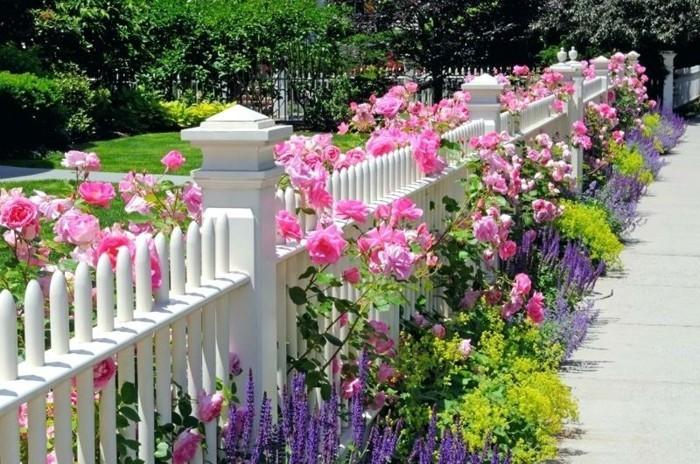 beeteinfassung mit pflanzen welche kr uter str ucher und blumen eignen sich daf r. Black Bedroom Furniture Sets. Home Design Ideas