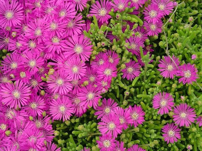 Bodendecker Gegen Unkraut Welche Pflanzen Eignen Sich Dafur