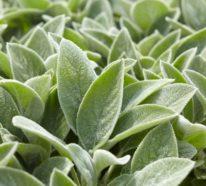 Bodendecker gegen Unkraut: Welche Pflanzen eignen sich dafür?