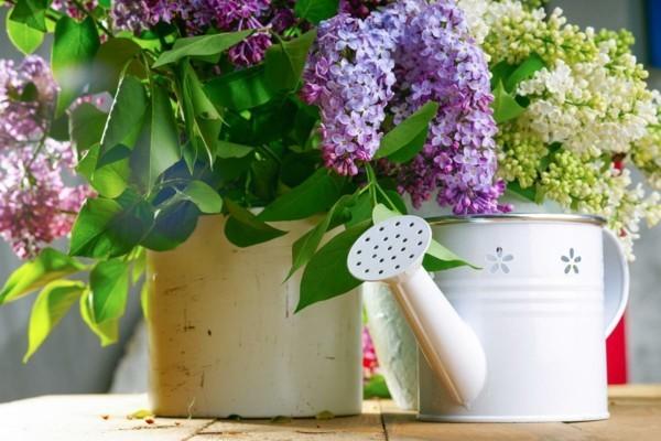 frühlingsblumen deko flieder kreative dekoideen