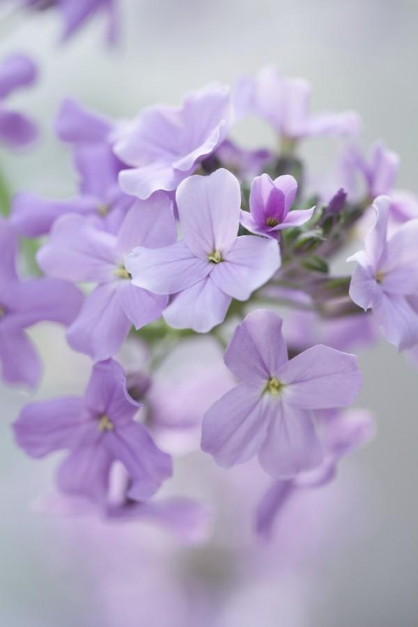 frühlingsblumen deko frische dekoideen