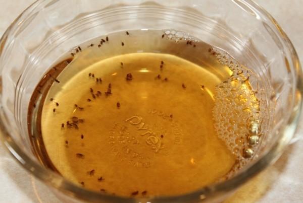 fruchtfliegenfalle selber machen mit essig