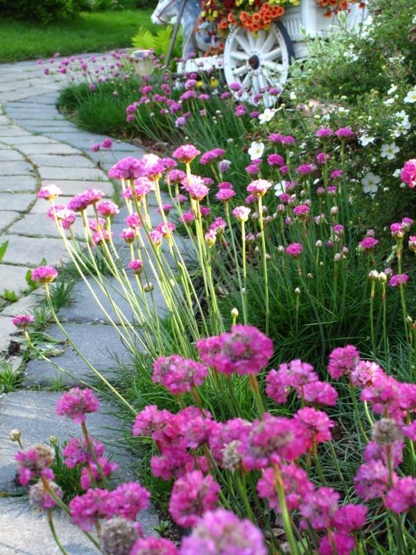 Gartenweg Ideen mit Pflanzen und Blumen, damit der Weg nach Hause ...