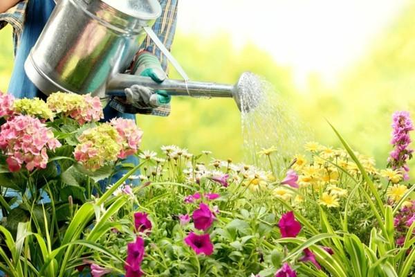 gartenweg ideen schöne gartenpflanzen regelmäßig pflegen