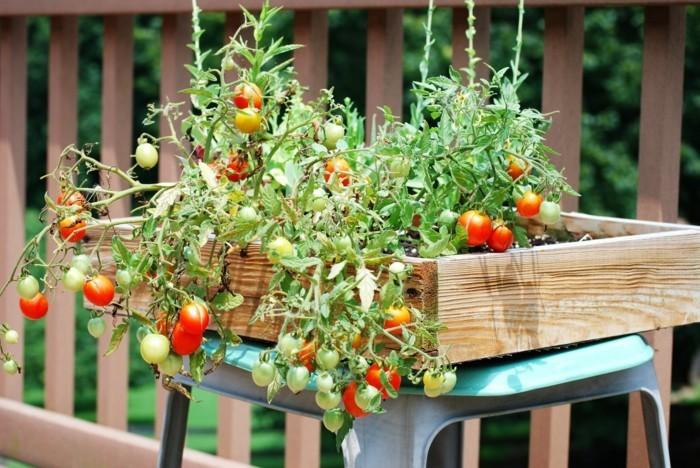 gemuesegarten anlegen frohe ernte balkon ideen gartengestaltung tomaten