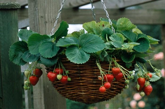 gemuesegarten anlegen froheernte balkon ideen gartengestaltung erdbeere im korb