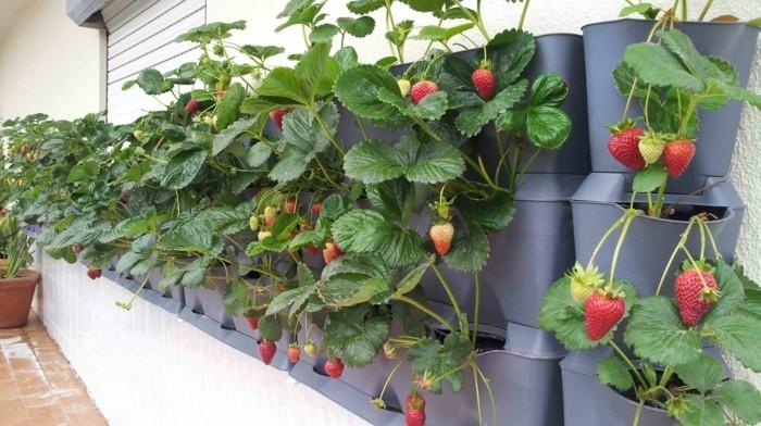 gemuesegarten anlegen froheernte balkon ideen gartengestaltung erdbeeren