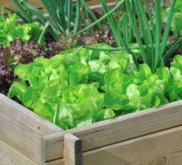 Gemüsegarten anlegen und sich über frohe Ernte auf Balkon oder Terrasse freuen