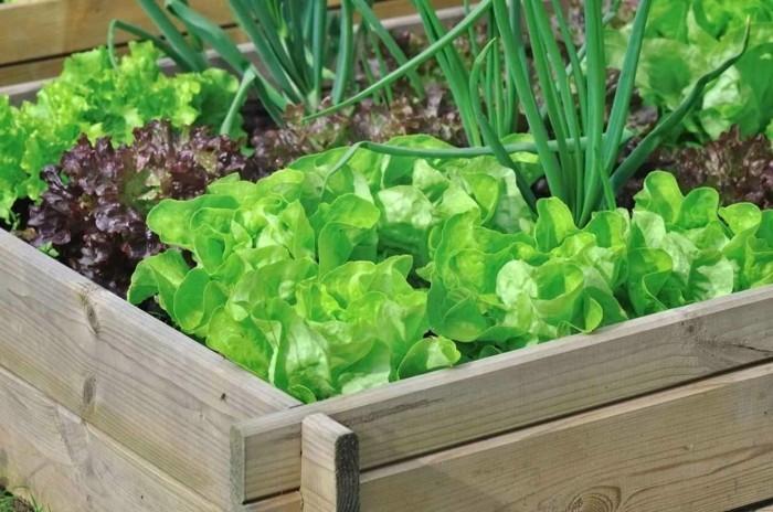 gemuesegarten anlegen froheernte balkon ideen gartengestaltung salate