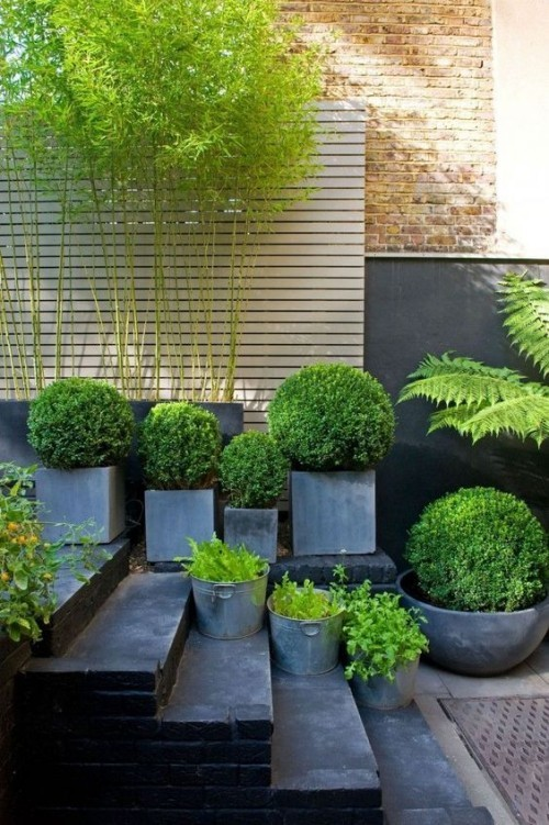 grüne Pflanzen auf Treppen