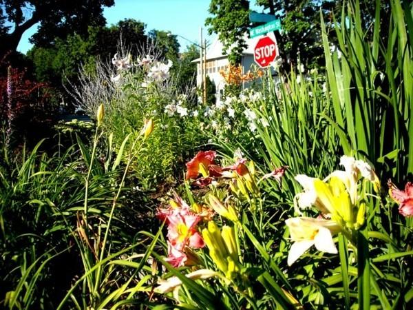 guerilla gardening blumen und pflanzen mit samenbomben anpflanzen