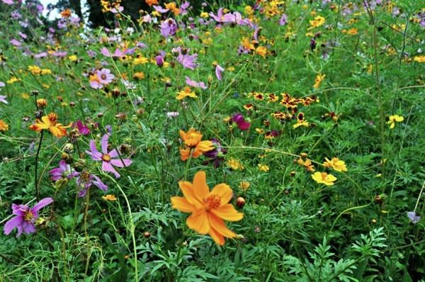 guerilla gardening ideen schöne blumenwiese