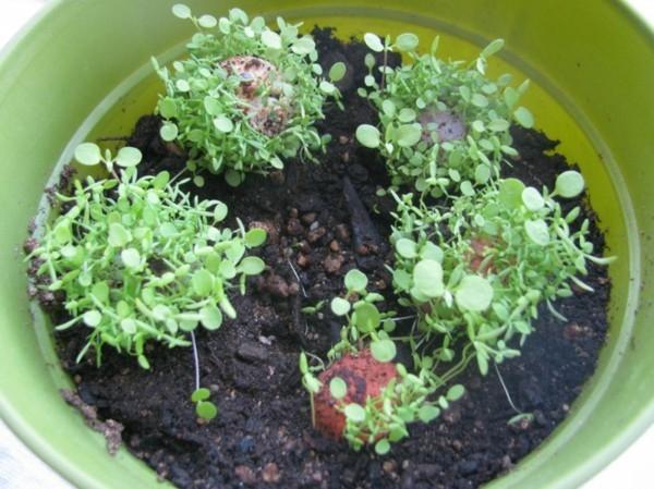guerilla gardening mit samenbomben