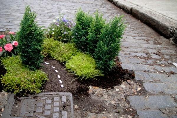 guerilla gardening pflanzen blumen