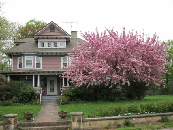 hausbaum zierkirsche vorgarten gestalten ideen
