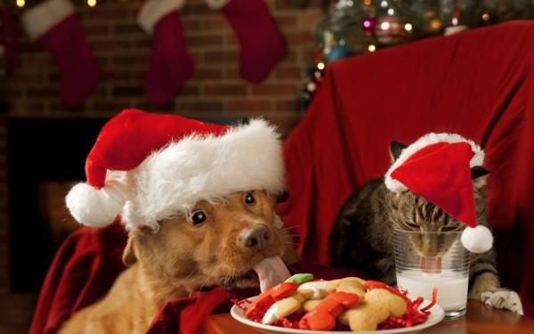 hund katze weihnachten hundekekse selber backen