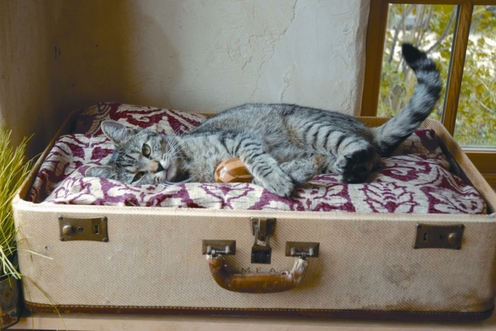 katzenhaus selber bauen moebel aus pappe katzenhaus aus karton moebel upcycling ideen katzenbett