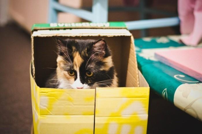 katzenhaus selber bauen moebel aus pappe katzenhaus aus karton suess