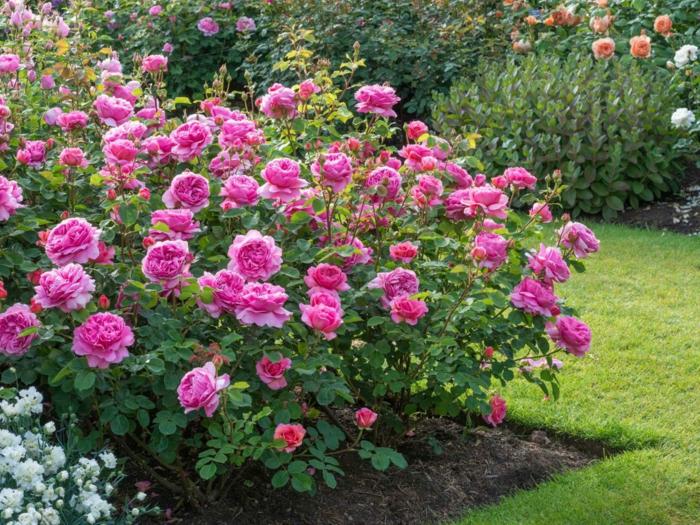 rasenkante natürlich beeteinfassung schöne rosen