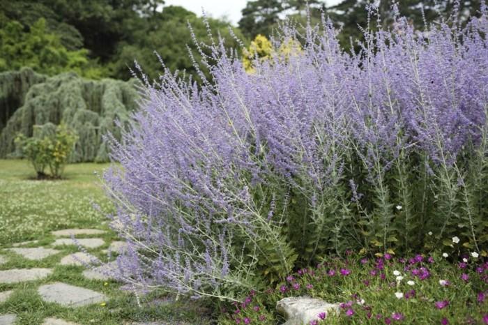 salbei hohe pflanzen beeteinfassung aus kräutern