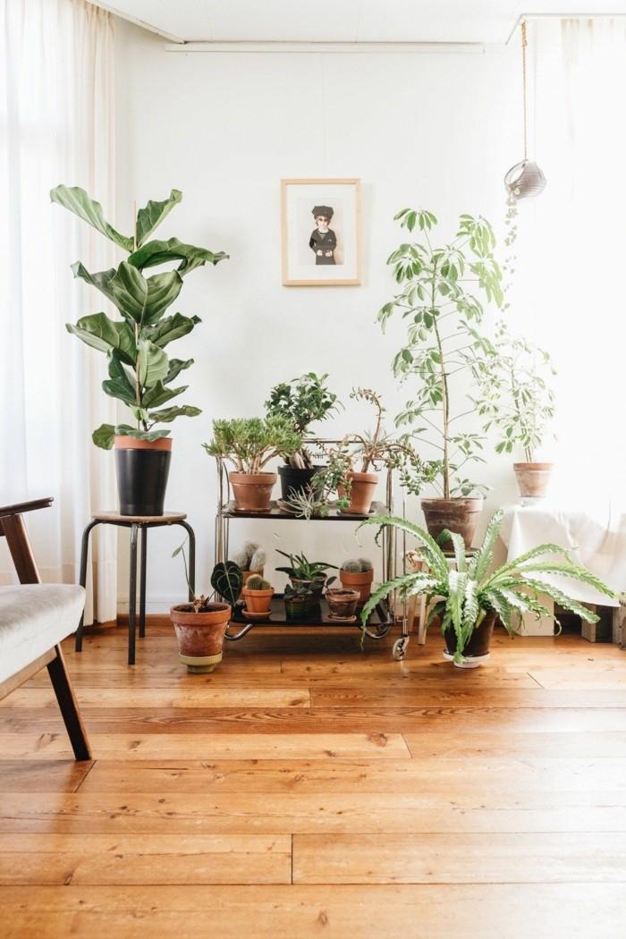 schefflera pflege wohnzimmer dekorieren ideen