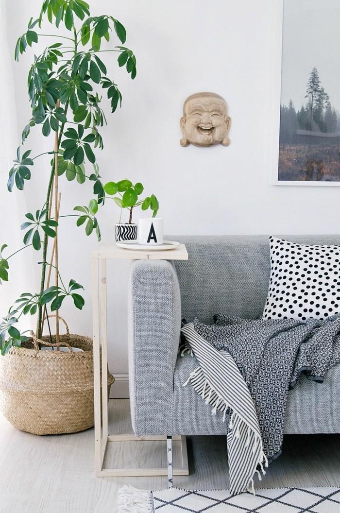 schefflera pflege wohnzimmer graues sofa teppich