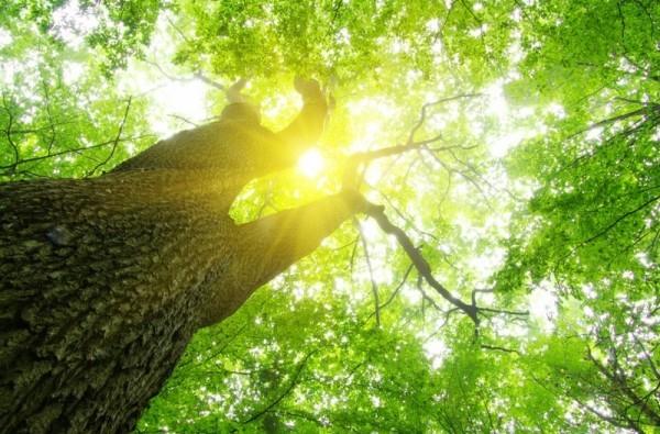sonne durch die bäume stromtarif