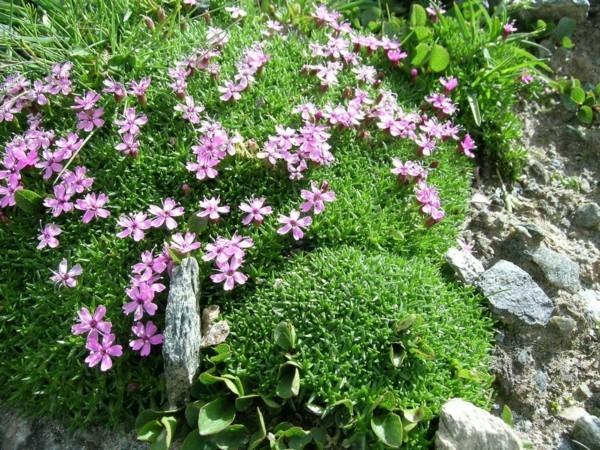 staudenblumen samenbomben selber machen guerilla gardening