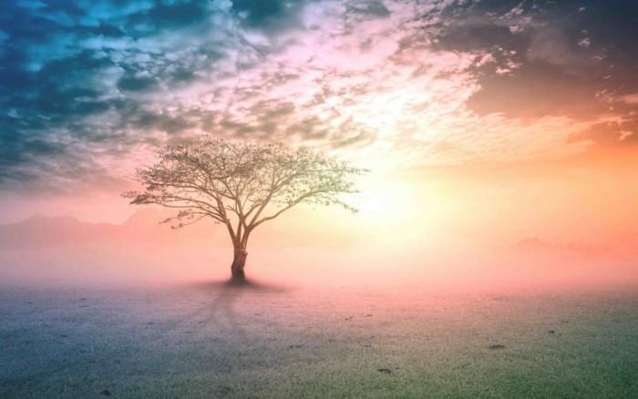 wandbilder baum beim sonnenuntergang